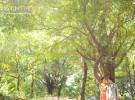 mingyungphoto-0028